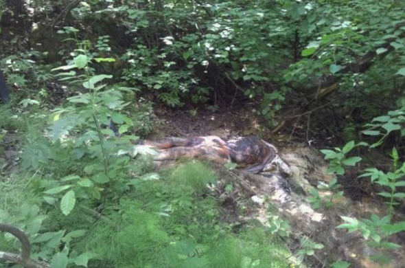 Под Казань нашли труп без головы и половых органов
