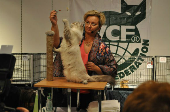 Выставка кошек прошла в Казани (фоторепортаж)