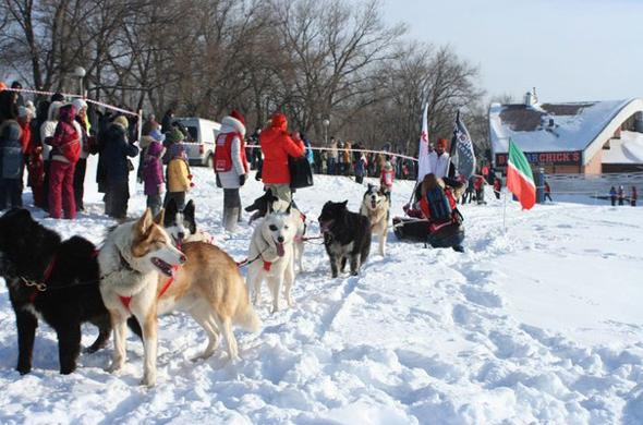 Завтра в Казани состоится финиш гонок на собачьих упряжках